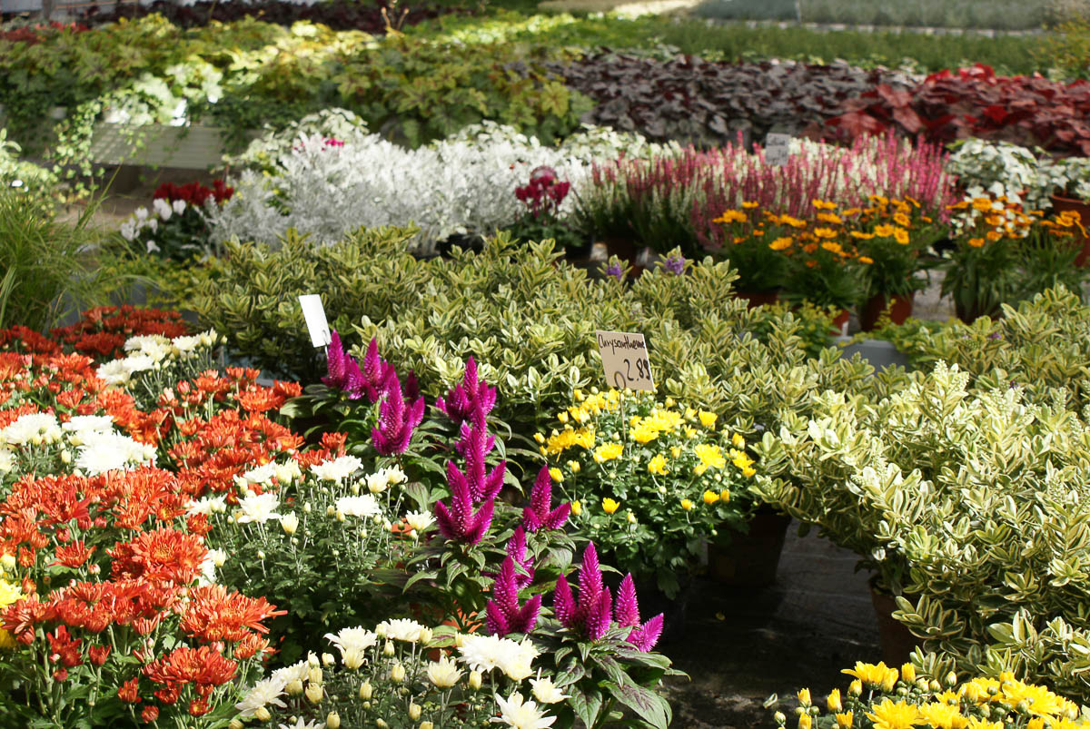 Frühlingsblumen in der Gärtnerei Werner in Röthenbach