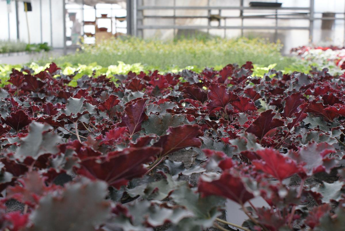 Blumen und Pflanzen in der Gärtnerei in Röthenbach