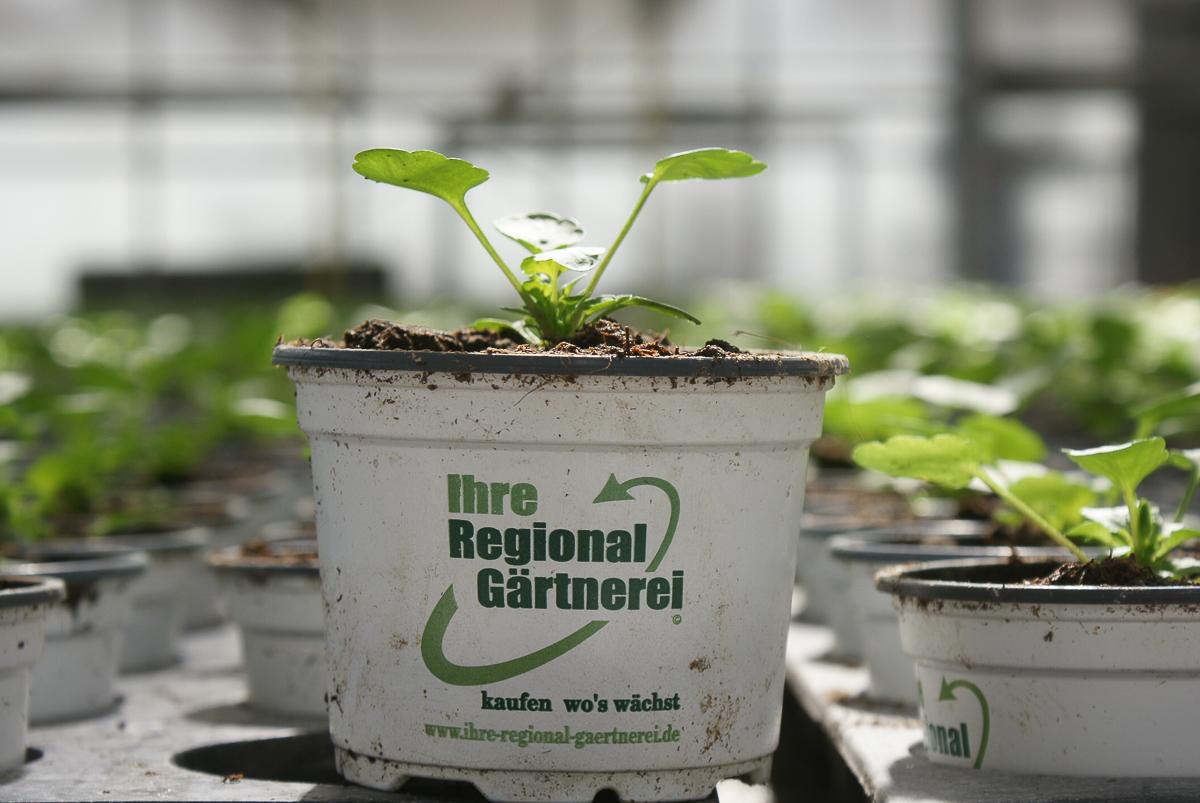 Ihre Regional-Gärtnerei