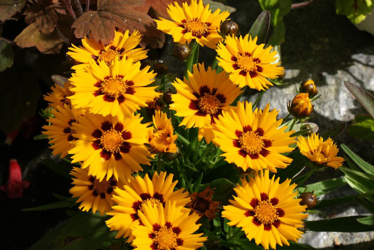 Blumen und Planzen in Ihrer Gärtnerei Werner in Röthenbach a.d. Pegnitz