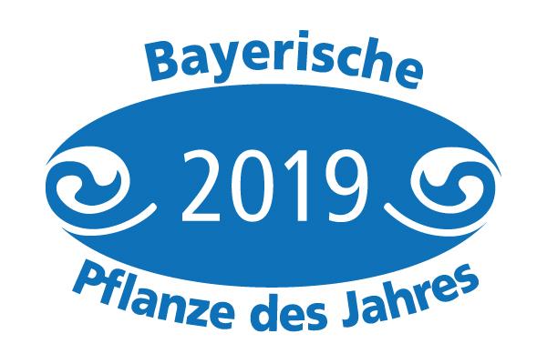 Bayerische Pflanze des Jahres 2019
