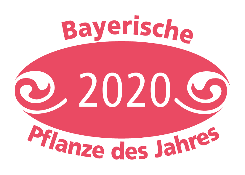 Bayerische Pflanze des Jahres 2020