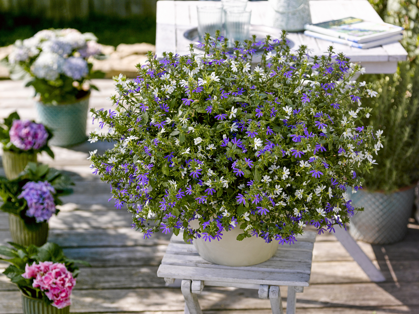 Bayerische Pflanze des Jahres